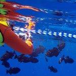 Snorkeling off Desecheo