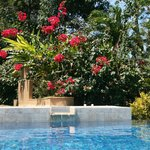 Typical infinity pool and beautiful landscaping at our villa