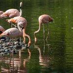 Flamencos en el aviario