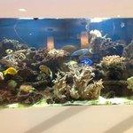 l'aquarium du Lobby