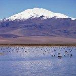 Salar de Tara - Laguna e Flamingos