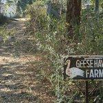 Geese farm entrance
