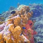 coral snorkeling off klein bonaire