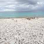 coral beach near pink beach on bonaire