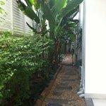 Small lovely garden at side of premises.