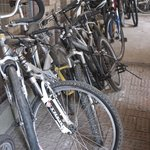 Lots of mountain bikes to choose from