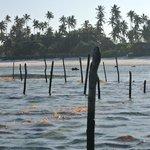 Marchant à marée basse, allant vers la barrière de corail