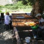 Fruit preparation for drying-Adam's Fig Farm