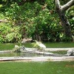 Egret atop fish pen