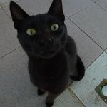 Un chat !!!!
