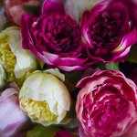 Flowers at Ventimiglia Market