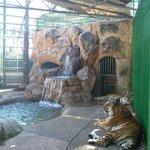 Reserva de tigres
