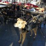 Cute dog on the Patio.