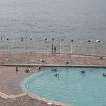 Birds in the pool