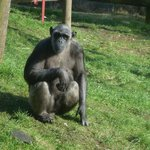 Sally at Monkey World Feb 2013