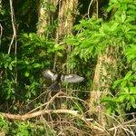 Vogelwelt der Kanäle