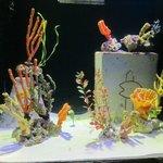 Small live corals