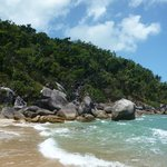 Jungle, Wheeler Island