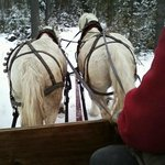 Taylor Farm sleigh ride horses, Megan and Molly