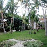 Hotel garden's