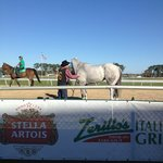 One of the gorgeous horses at Tampa Bay Downs