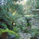 Relaxing rainforest setting.