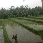 Vue sur la riziere - Chambre Awan 5