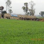Rural dairy farm