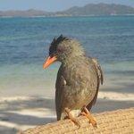 Завтрак с птицами у кромки прибоя.