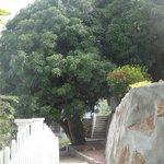 Территория отеля - это тропический сад  с деревьми манго, кокосов и неопознанн