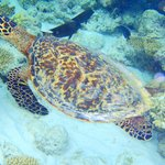 turtle from the reef