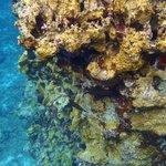 coral along wall