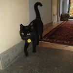 La gatta del vicino: affabile e curiosa