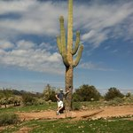 cactus as high as 50' in the valley!! amazing