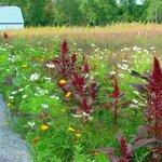 Sentier dans les champs de fleurs sauvages