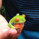 Red eyed tree frog. Yes its REAL