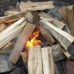 In woodchips we trust.