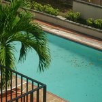 la piscina... llena de hojas y limo