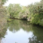 Estero River ~ Great for Kayaking or Canoeing