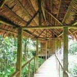 Walk Way to Bungalow