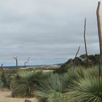 Giant grass trees on the road to Flour Cask Bay Retreat