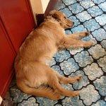 Whiskey, the hostel dog!
