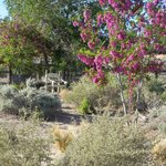 Spring in the desert at the Turtle