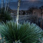 Moonlight on the yucca was taken by a guest Jim Crotty