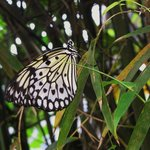 Serre papillons