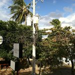 Alcazar sign, tree where swarm of birds hang out, and comical wiring scheme on