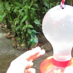 Hummingbird tour (included in the 2day Arenal Tour)