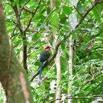 温泉で見た鳥