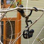 Affenbesuch in unserer Suite