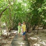 les mangroves de CURIEUSE